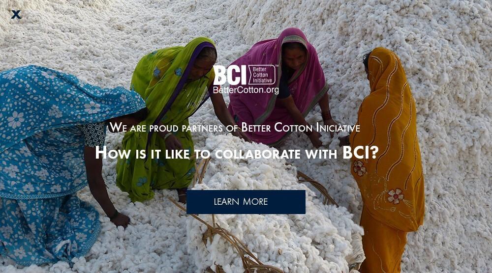 BCI El Ganso